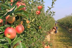 Odszkodowanie z ubezpieczenia odpowiedzialności cywilnej rolnika