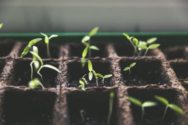 Nowe techniki hodowli pozwalają produkować więcej żywności