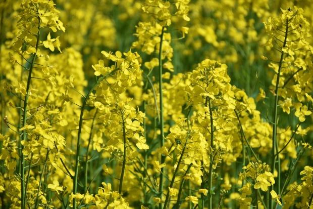 Portfolio INNVIGO  poszerzyło się o nowe produkty do ochrony zbóż ozimych