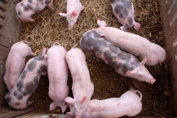 Zmiana programu bioasekuracji mającego na celu zapobieganie szerzeniu się ASF