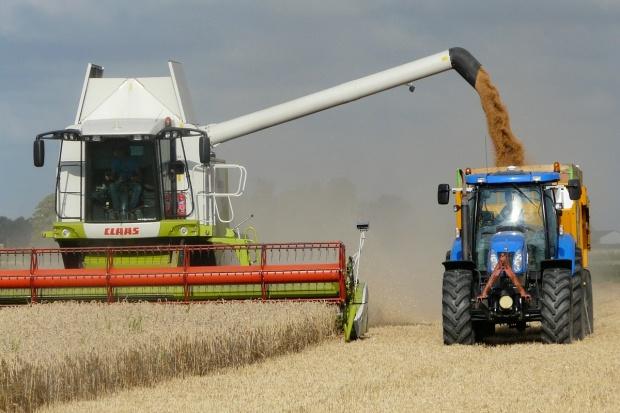 IGC: Większa prognoza światowych zbiorów zbóż