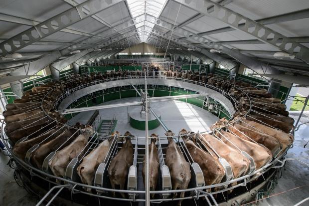 USDA: Prognoza dla światowego rynku mleka
