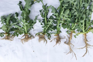 Wpływ wapnowania na żyzność gleb