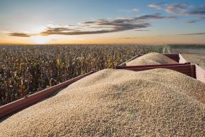 Mocny spadek ceny soi