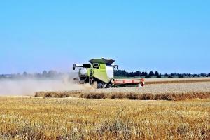 KE oczekuje zbiorów zbóż na poziomie 312,9 mln ton