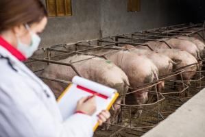 SRiW popiera utworzenie jednej inspekcji bezpieczeńswa żywności