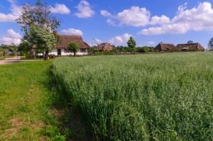 Skansen wsi mazowieckiej w Sierpcu zaprasza na żniwa
