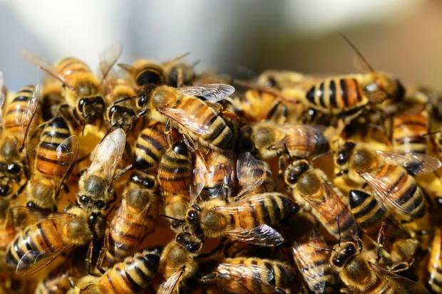 Poczuj się jak pszczoła