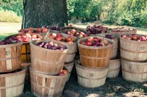 Unijne zbiory jabłek spadną do 12 mln ton