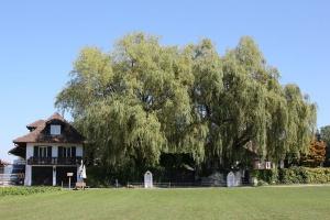 Gmina zadecyduje o zasadach wycinki drzew