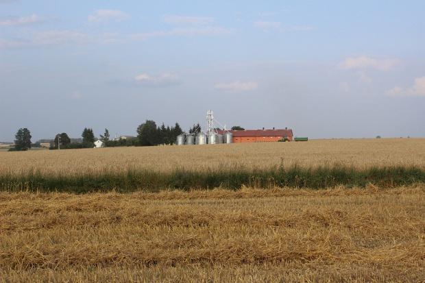 Ceny zbóż stabilne