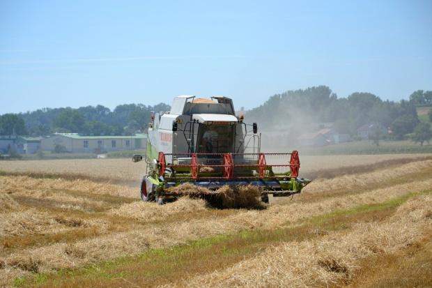 Rosja: Prognoza zbiorów zbóż podwyższona kolejny raz