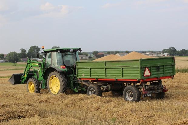 Ceny w skupach zbóż bez większych zmian