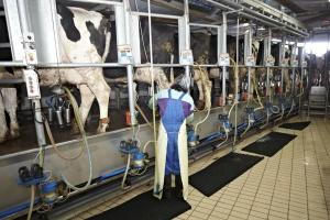"""OSM Piątnica promuje produkty  """"Bez GMO"""""""
