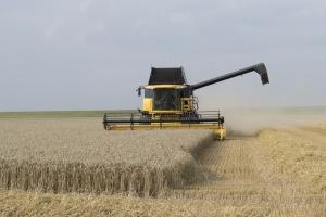 KE koryguje w dół prognozę tegorocznych plonów zbóż w UE