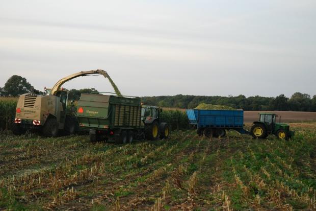 Ceny zbioru kukurydzy - początek sezonu 2016