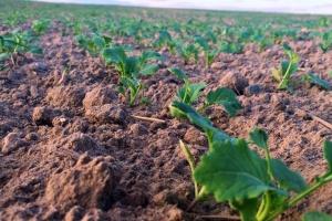 Rolniku - jesienią monitoruj swoje oziminy