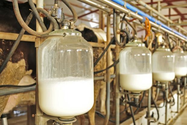 Mocno drożejące przetwory pociągną w górę cenę mleka w skupie