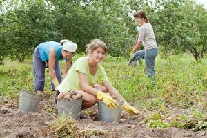 Zatrudnianie cudzoziemców w gospodarstwach rolnych
