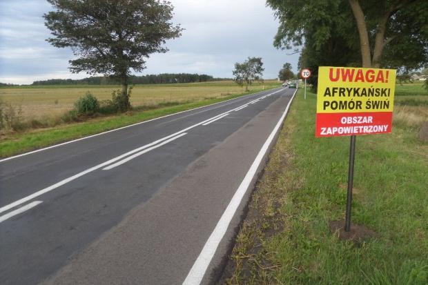 GLW: Na Mazowszu jest kolejne ognisko ASF w Polsce