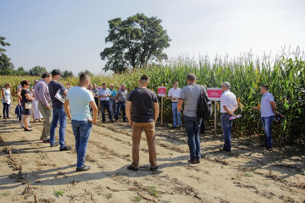 Dzień Kukurydzy firmy IGP