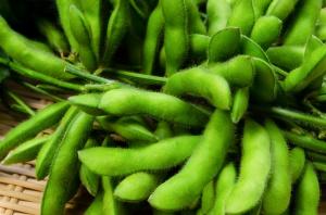 Ceny oleistych w dół pod wpływem rekordowej produkcji soi