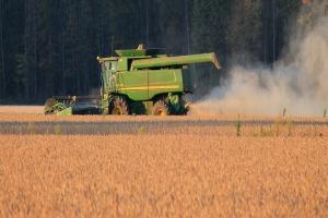 USA: Lekki wzrost prognozy zbiorów soi