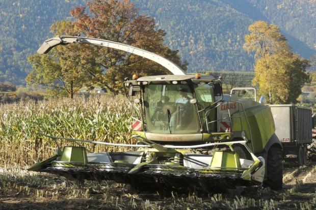 UE: Średnie zbiory kukurydzy