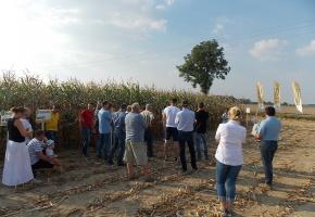 Uprawa kukurydzy na kiszonkę z Osadkowskim