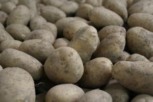 Mniej ziemniaków w północno-zachodniej części UE