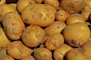 Niemcy: Zbiory ziemniaków mniejsze o 1,9 proc. od ubiegłorocznych