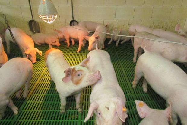 ARiMR zrefunduje część kosztów dostosowania gospodarstwa do wymogów programu bioasekuracji