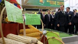 Rosja: Ogromne braki pszenicy na rynku
