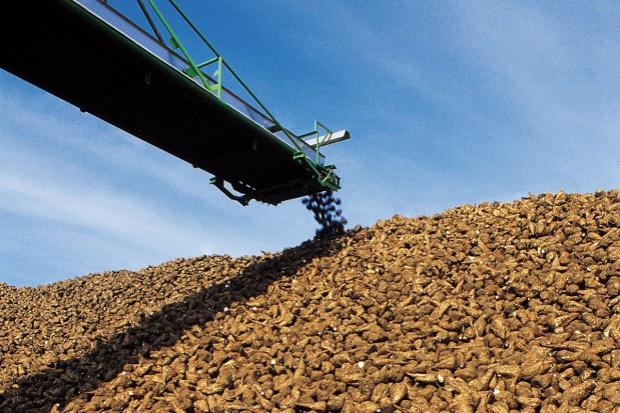 UE: Plonowanie buraków cukrowych wyższe niż przed rokiem