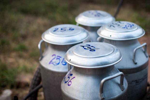 Nadprodukcja mleka w USA, rolnicy wylewają nadwyżki