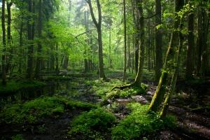 MŚ proponuje UE pomoc w odtwarzaniu cennych gatunków i siedlisk