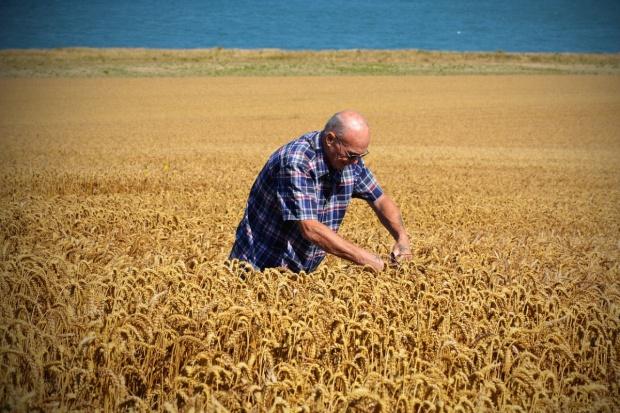 Tragicznie niskie zbiory zbóż we Francji
