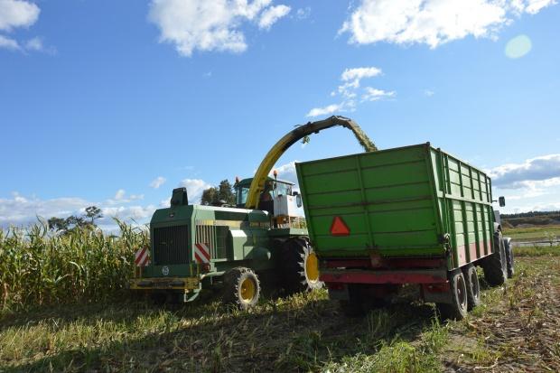 Ukraina: Wysokie zbiory zbóż