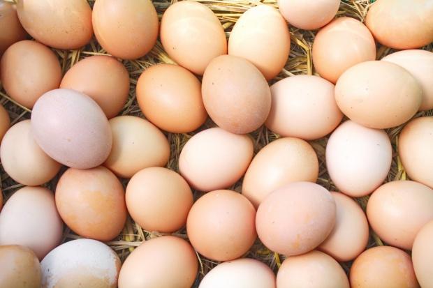 Zakażone salmonellą jajka z Polski trafiły na wspólny rynek UE