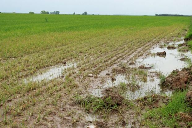 Deszcze przeszkadzają w wykonywaniu oprysków