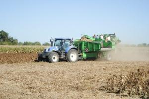 Urodzaj ziemniaków i niskich cen