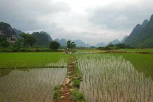 Chiny poluzowują przepisy dotyczące transferu gruntów rolnych