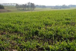 Trzy chelaty od Intermag dopuszczone w rolnictwie ekologicznym