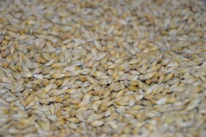 Francja: Prognozy eksportu i bilans zbóż