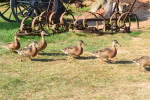 UE: Coraz więcej ognisk ptasiej grypy