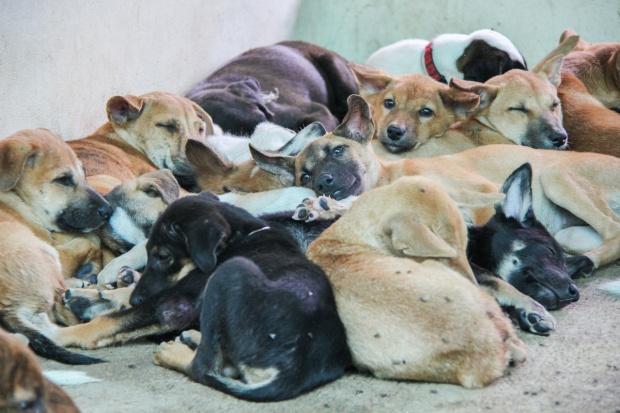 Senat: Gminy będą mogły finansować sterylizację zwierząt domowych