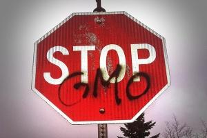 Nie ma zakazu GMO