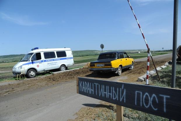ASF: Rosjanie wprowadzają kwarantannę w regionie krasnodarskim