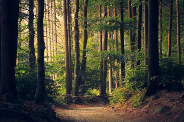 Szyszko: Lasy Państwowe mogą tworzyć miejsca pracy