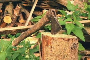 Kiedy i ile za wycięcie drzewa?